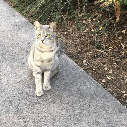 Gatos de disneylandia
