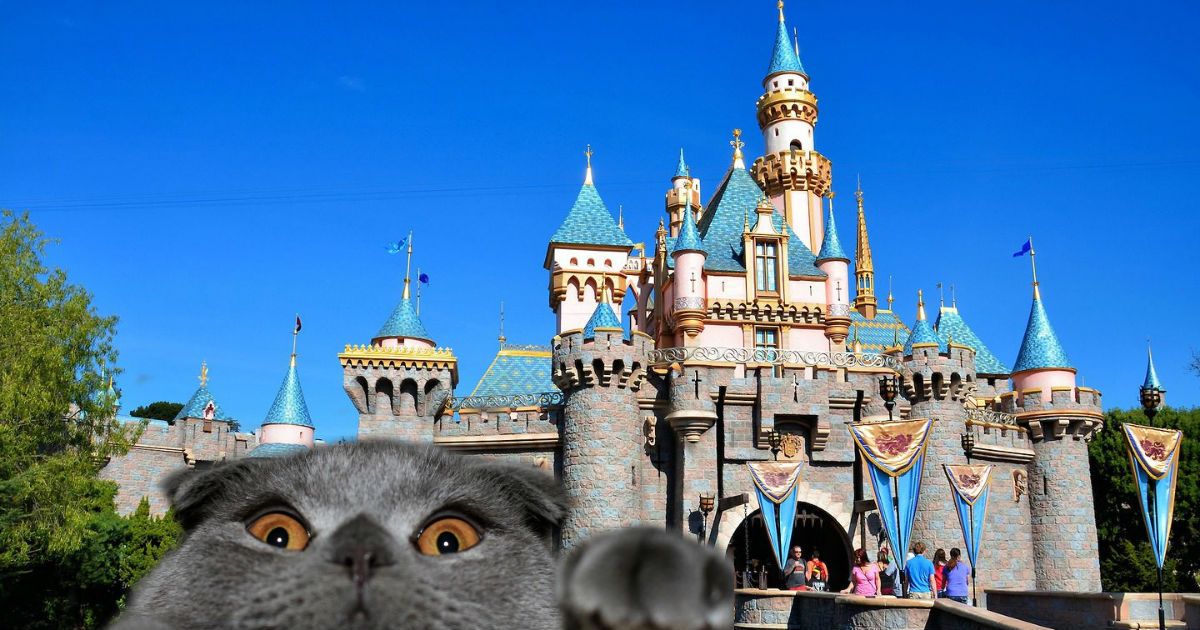 Gatos De Disneylandia, Gatos Disney, Disneyland Anaheim, Disney Misterios, Gatos, Disney