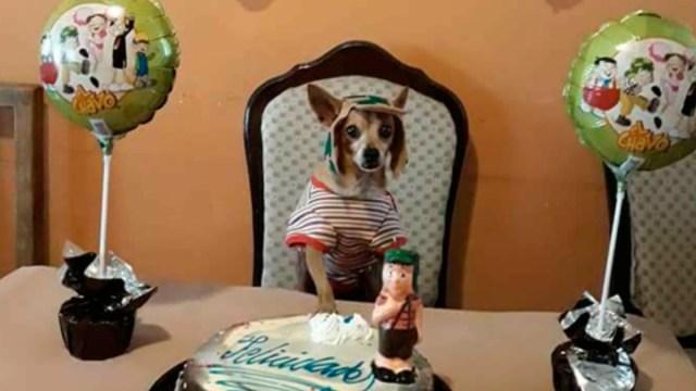 perrito-fiesta-chavo