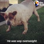 Perro-Obeso-Pierde-Peso-Rescate-Animal-Adopción