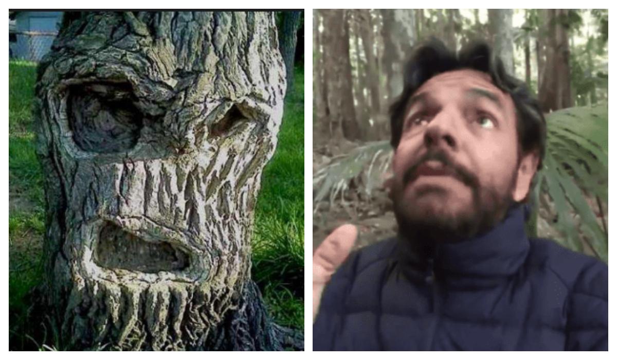 Eugenio Derbez árboles asesinos Encontró en Jungla