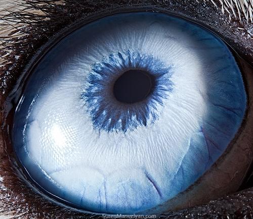 Ojos de animales