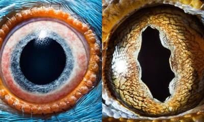 Fotos De Ojos De Animales, Ojos De Animales, Ojos De Animales Lente Macro, Suren Manvelyan, Fotografía, Animales