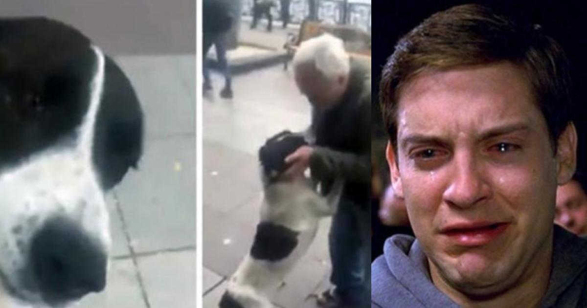 Perro reencontrándose con su dueño después de tres años