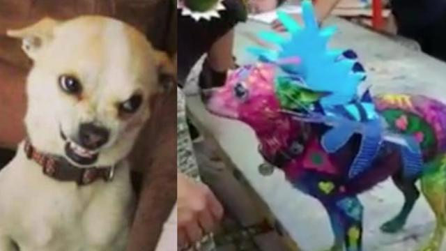 Mujer pinta a su perro como alebrije