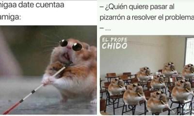 Memes Del Hamster Ciego, Memes De Hamster, Ciego, Hamster, Memes, Meme Hamster