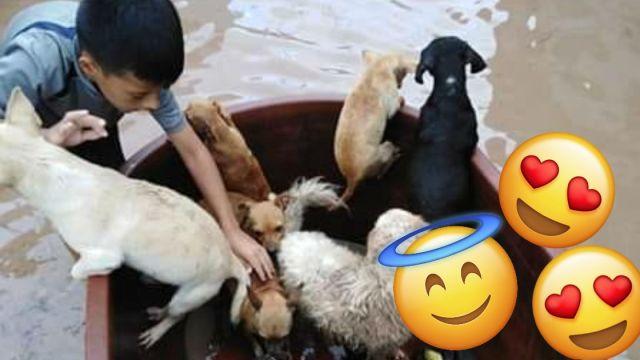 Niño Salva A Mascotas, Niño Guarda A Mascotas En Tina, Niño Salva A Mascotas Del Huracán, Jostyn Dilan, Niño Salva A Mascotas De Inundación, Huracán Willa