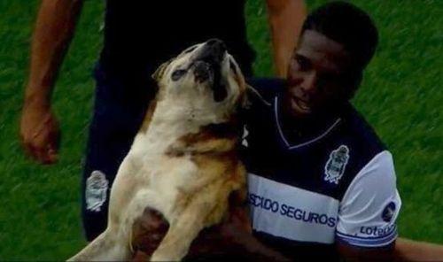 Perro interrumpe partido de futbol en argentina