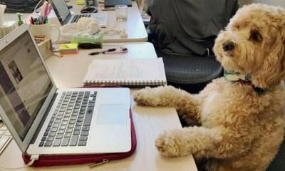 Llevar a tu perro a la oficina ayuda a reducir estrés