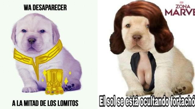 Memes Del Perrito Triste, Memes Perrito Triste, Memes, Perrito Triste, Memes Cachorrito, Cachorrito Memes