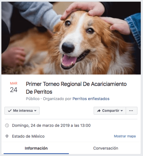 Organizan primer torneo regional de acariciamiento de perritos