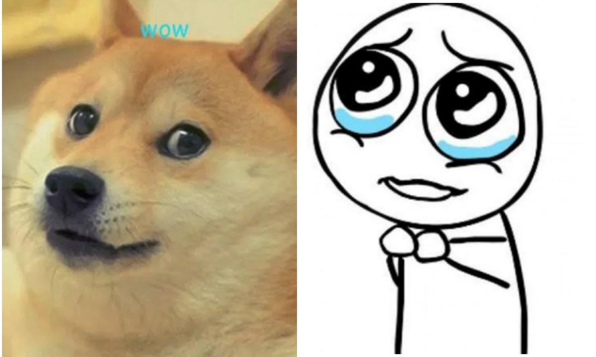"Así luce ""Doge"" la famosa perrita del meme"