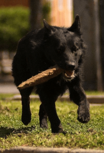 Niños piden permiso a dueños de perro para jugar