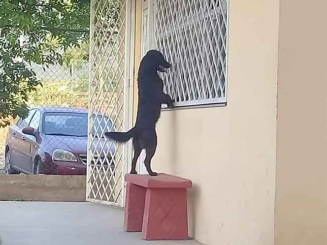 Perro caminó hasta escuela para ver a su dueño