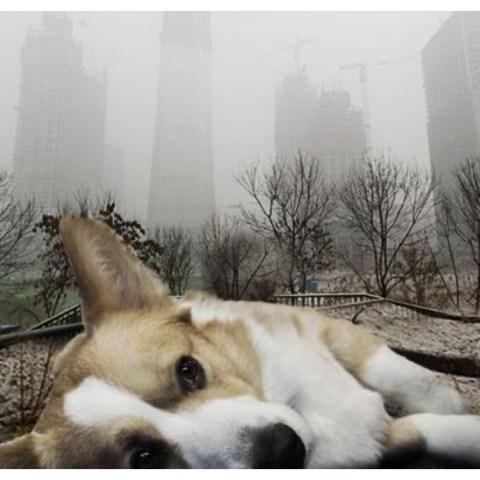 mascotas durante la contingencia ambiental