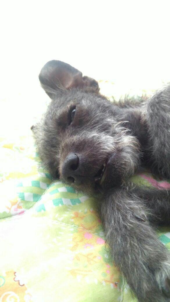 Viernes de animalitosbebé para curarte la drepresión