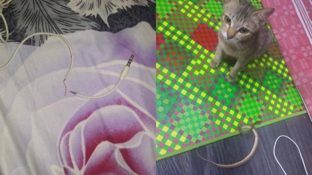 Gato Destruye Audífonos Regresa Con Serpiente, Mi Gato Trae Animales Muertos, Gato, Destruye, Audífonos, Serpiente