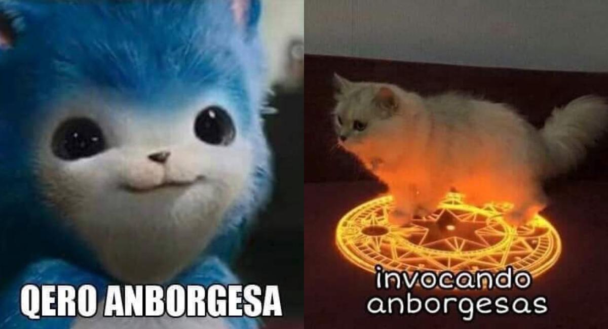 El origen y los memes del gato con su hamburguesa