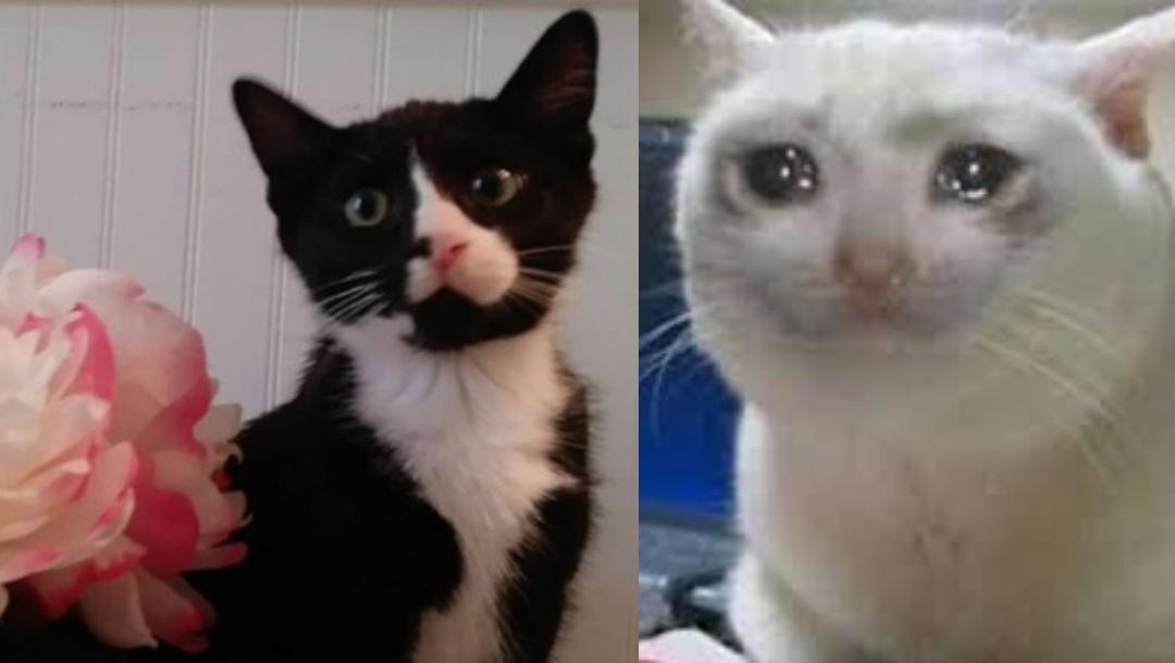 Gato, Lavadora, Sobrevive, Gato Lavadora, Gato En Lavadora Sobrevive, Mujer Mete Gato A Lavadora