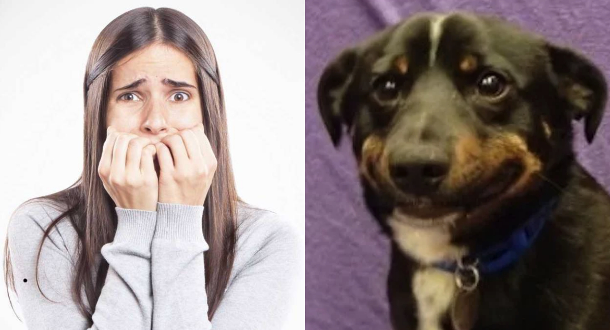 Perros, Estrés En Perros, Perro Estresado, Estudio, Perro Estresado Causas, Estrés En Perros Síntomas