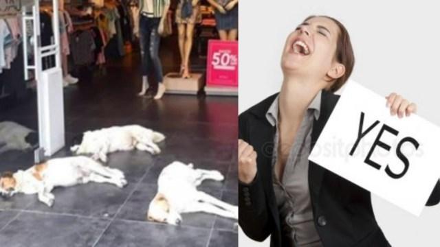 Tienda de Ropa Perros Calor Colombia, Tienda de Perros Refugia Perros, Tienda De Ropa Perros, Calor Colombia, Perros Calor, Tiendra de Ropa