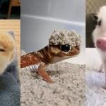 Viernes de animales: recuento semanal de videos y fotos