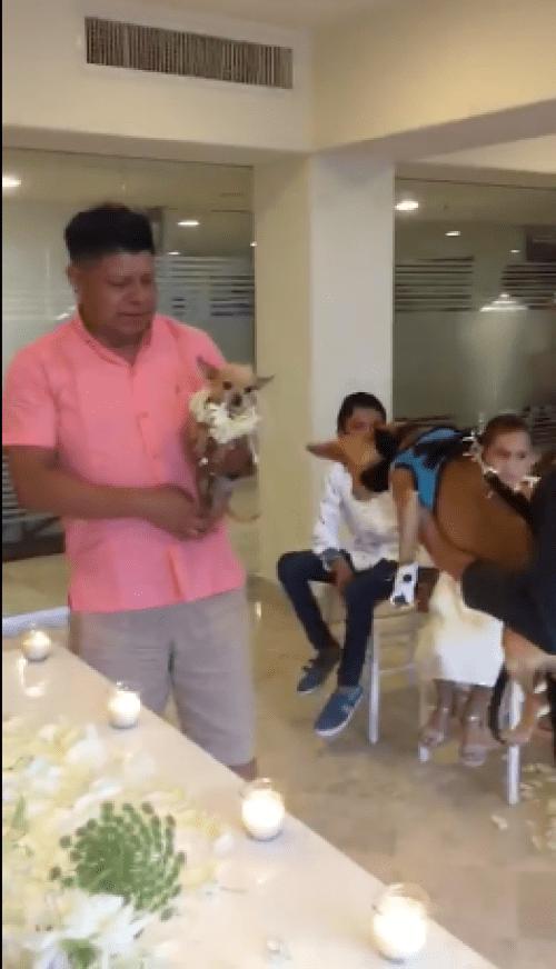 VIDEO: Hacen perra entre perros chihuahua en Puerto Vallarta