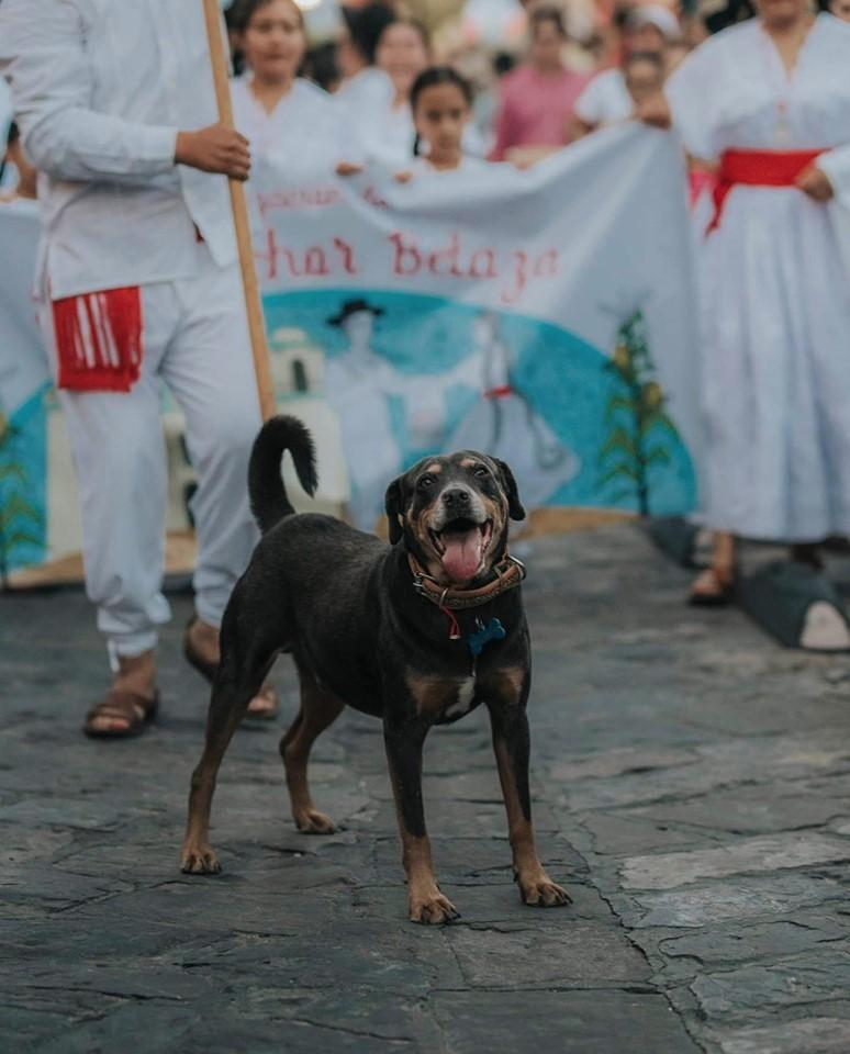 Mazapán, perro de la Guelaguetza recibe una guayabera