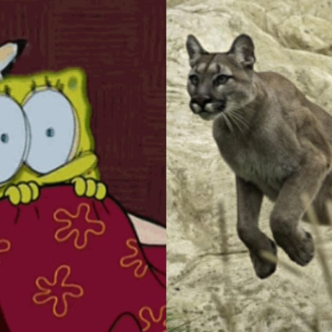 Campesino Defendió A Su Perro De Puma, Hombre Defendió A Perro De Puma, Hombre Peleo Contra Puma Por Su Perro, Hombre Pelea Puma, Campesino Pelea Puma, Campesino Puma
