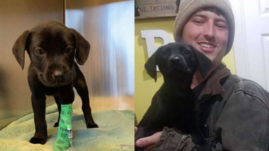 Joven adopta a un perro sordo y le enseña lenguaje de señas