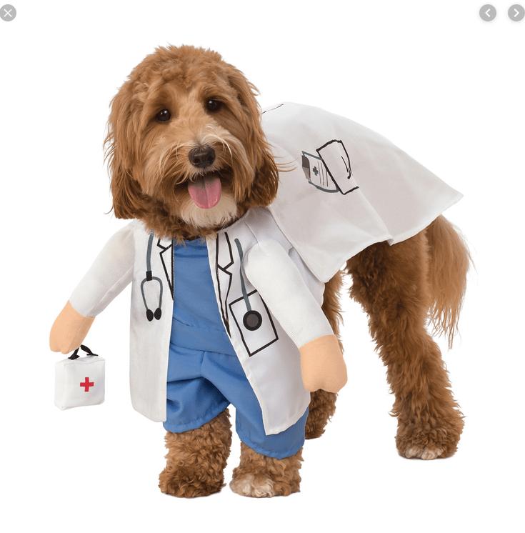 Disfraces para perro de Halloween y Día de Muertos fáciles