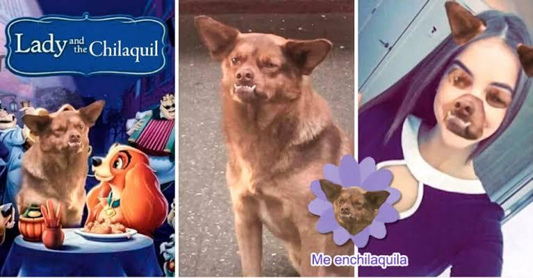 Memes de chilaquil