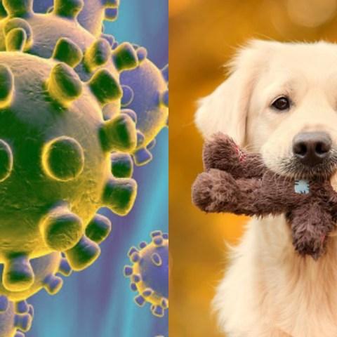 Cómo prevenir que tu perro se contagie de coronavirus