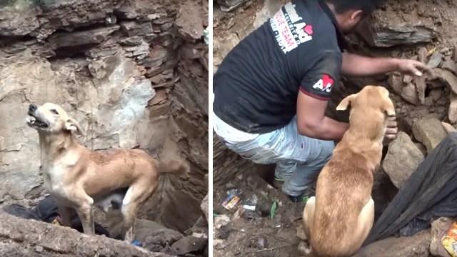 Perrita rescata a sus cachorros removiendo piedras