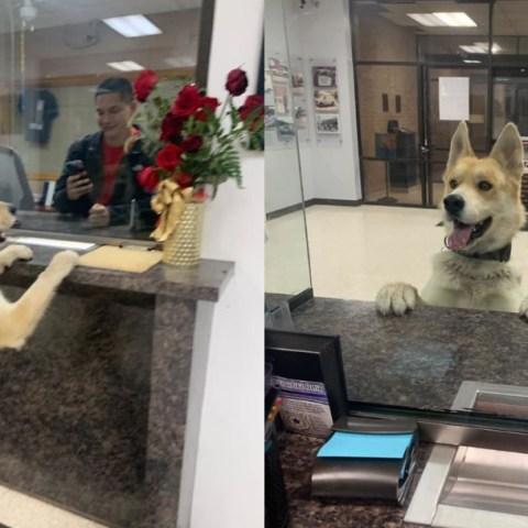 Este perro llegó a la policía a reportarse como desaparecido