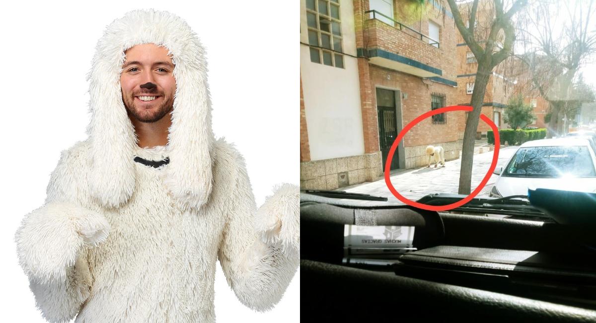 Se disfraza de perro para evitar la cuarentena en España