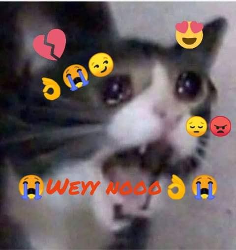 meme gato wey no