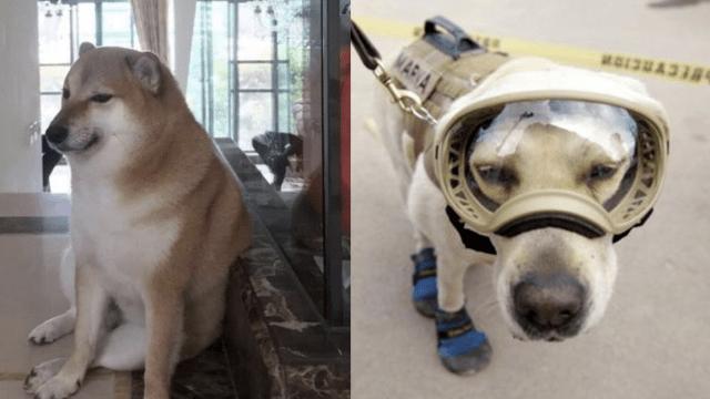 Los perros más famosos de la historia en el Día del Perro