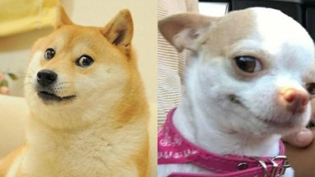 Cada año de humano equivale a 30 años de perro, confirma la ciencia