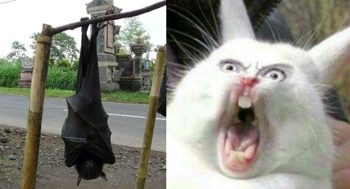 Murciélago tamaño humano aterroriza a Internet (FOTOS)
