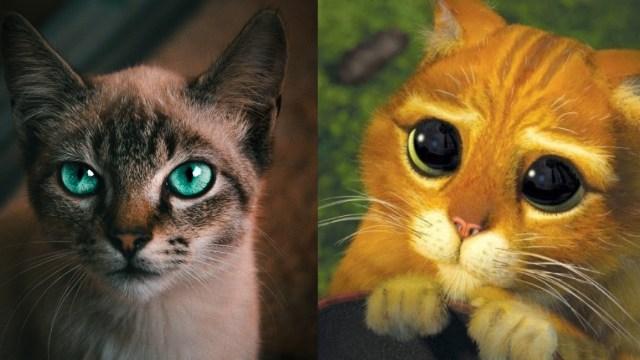 Que significa Michi para los gatos, origen de la palabra