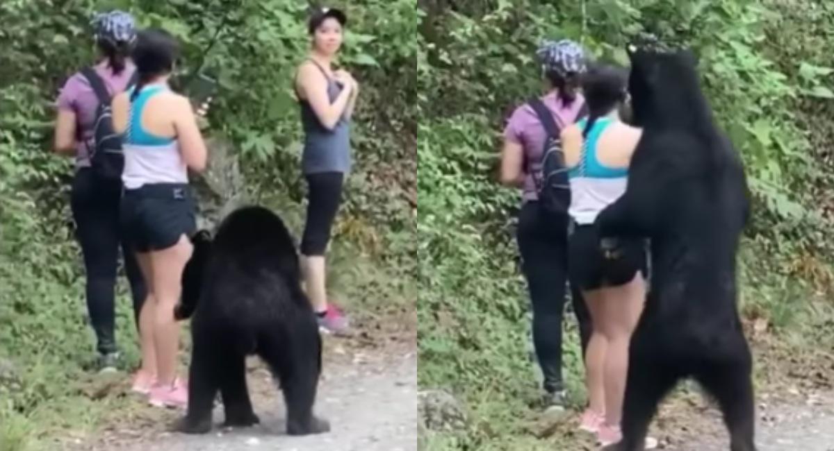 Petición firmas evitar oso Monterrey vaya al zoológico