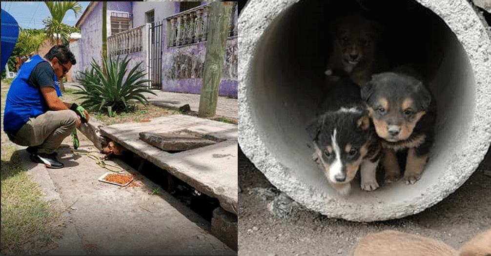 Rescatan a 10 perritos de una alcantarilla en Veracruz