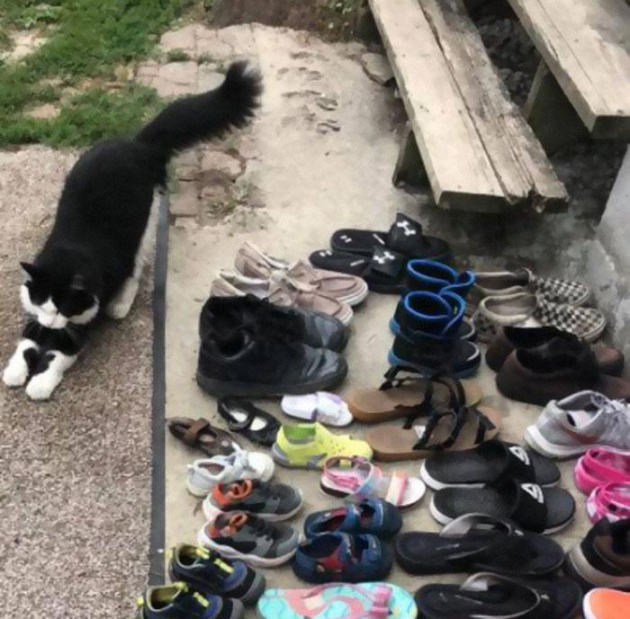 Gato robazapatos y su dueño los regresa por Facebook