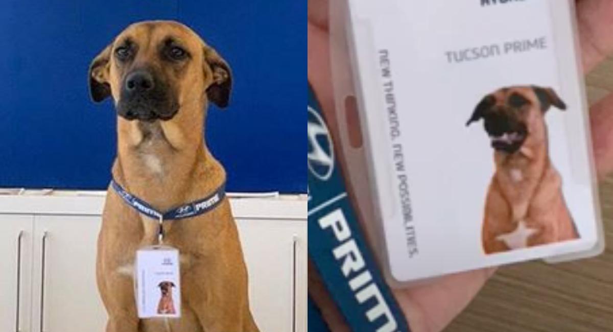 Perro se convierte empleado de agencia de autos: Fotos