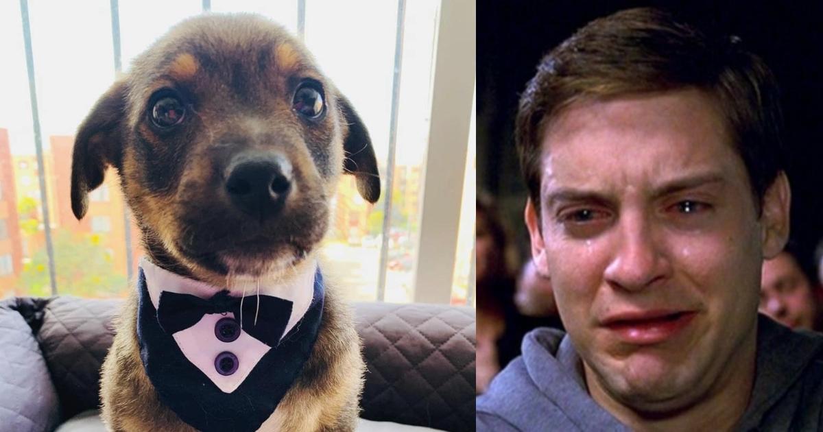 Dejan plantado a perro el día de su adopción, se hace viral y encuentra hogar