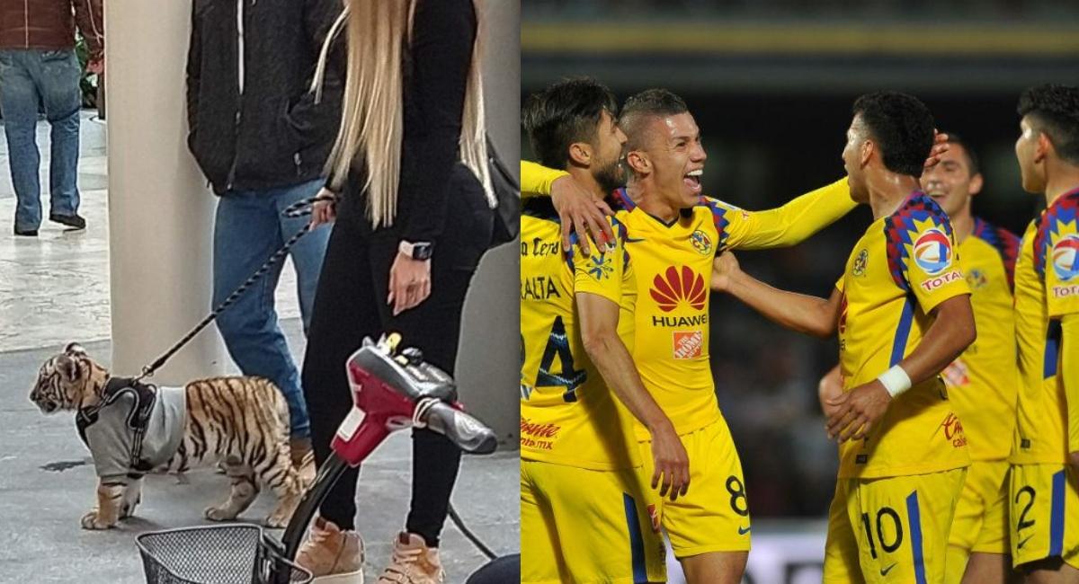 El tigre de Antara es de la novia de un futbolista del América