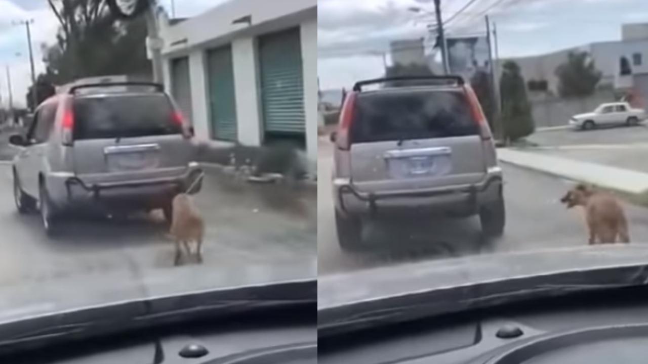 Perro es amarrado a una camioneta y lo arrastran por la calle