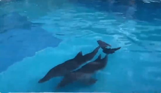 Trasladan delfines a alberca por huracán Delta en Quintana Roo