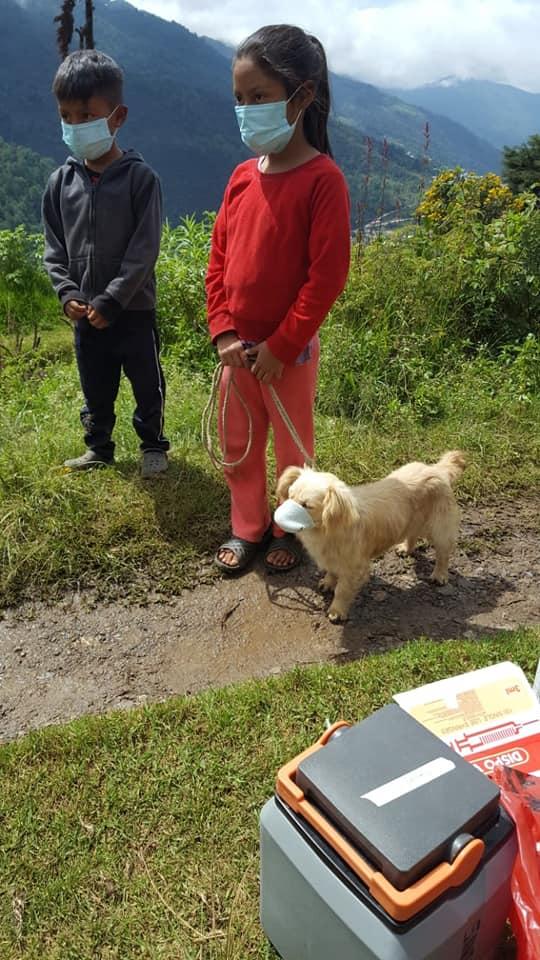 Perro con cubrebocas